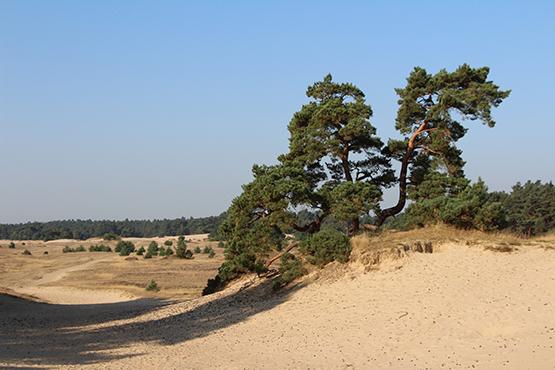Beheerplan 'Natura2000 Veluwe' vastgesteld
